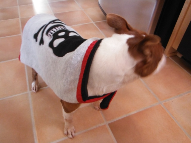 Skull and Crossbones dog sweater